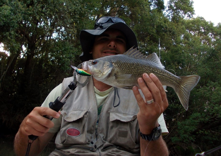North Maroochy Bass 36cm released