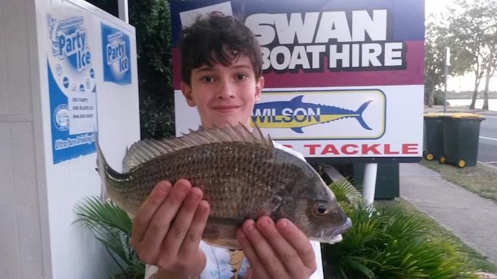 35cm bream Will Diacos Chambers Island