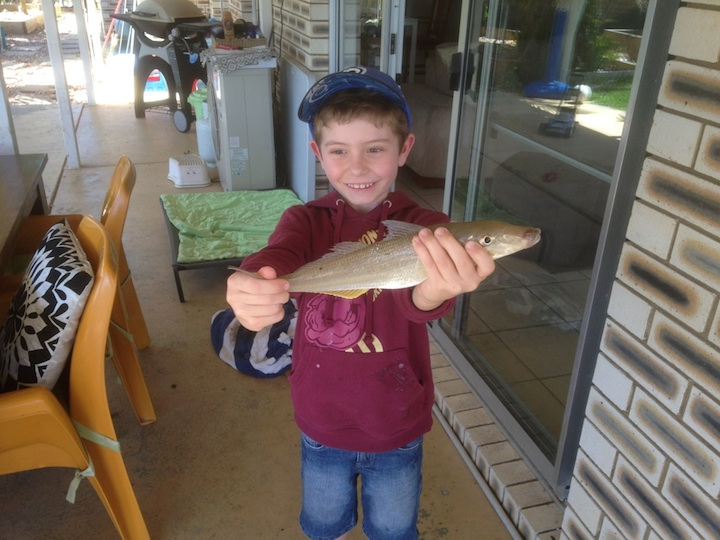 Jed 34cm Summer Whiting