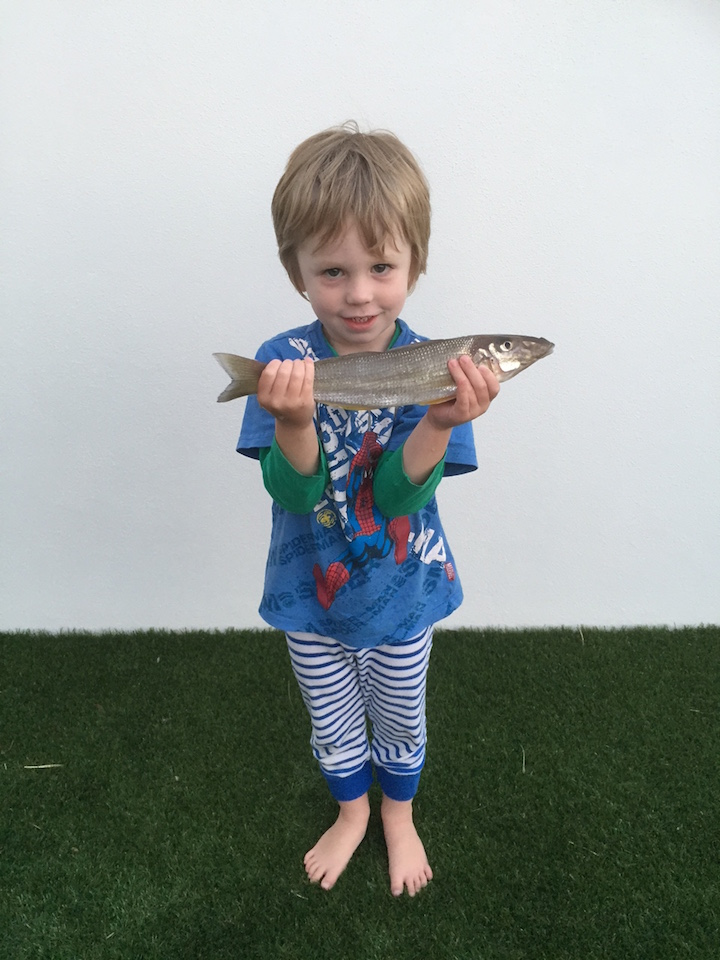 Ari Innes 34cm Caught All By Himself