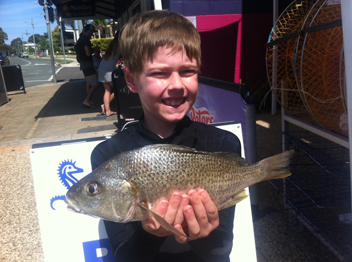 Ben Gordon 35cm Bream