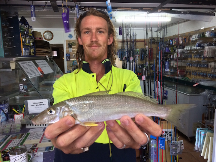 Daniel West 29cm Whiting Chambers