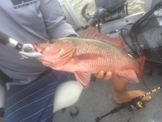Joe Bartley 47cm Mangrove Jack